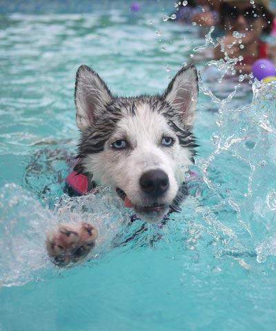Dog swimming day at Rocky Pool